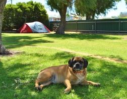 Bathers Paradise Caravan Park Esperance Pet Friendly Park